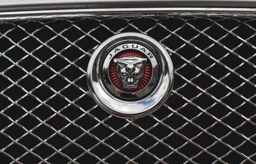 JaguarTheQueen-C