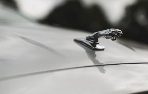 JaguarTheQueen-D